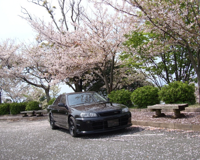 SKYLINE'09_cherry-blossoms.JPG