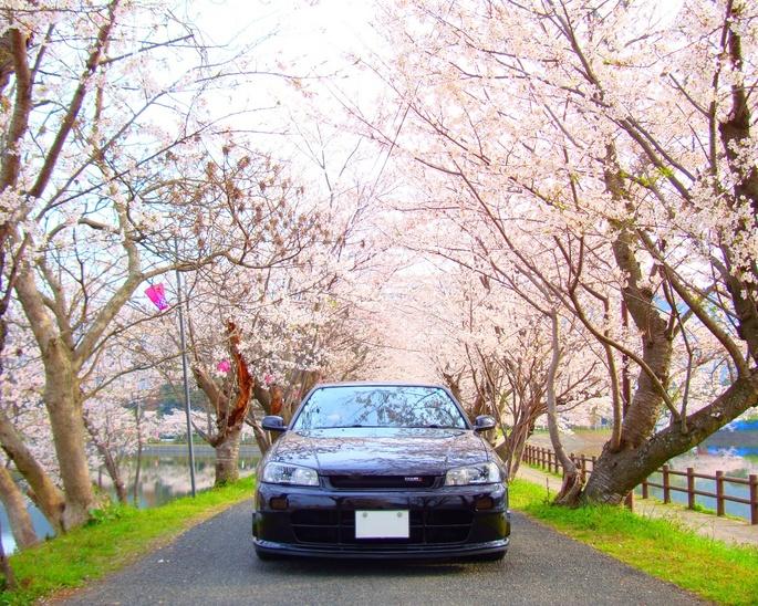 SKYLINE'10_cherry-blossom (1).jpg