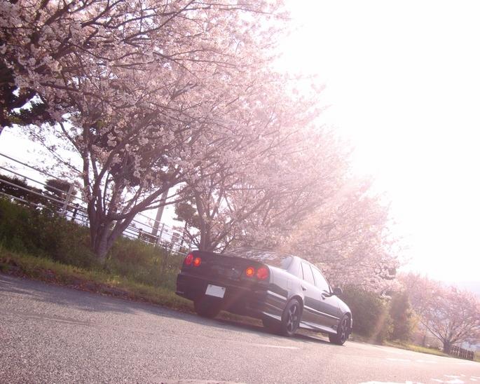 SKYLINE'11_cherry blossom.JPG
