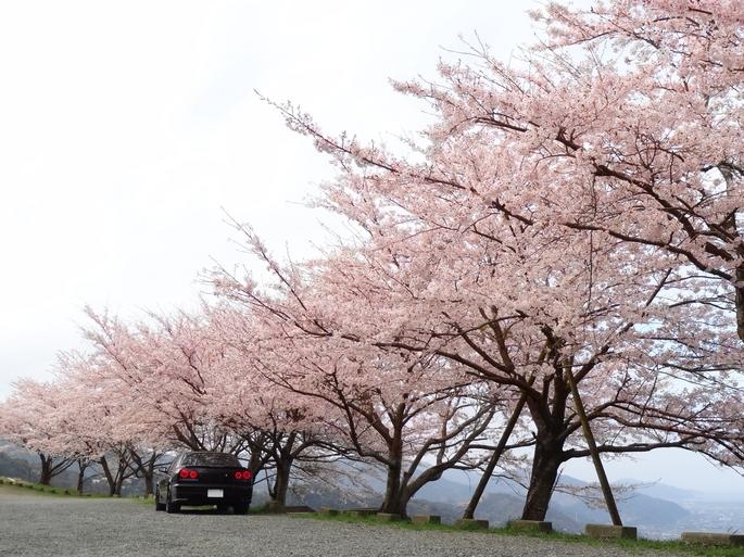 SKYLINE'12_sakura(1).jpg