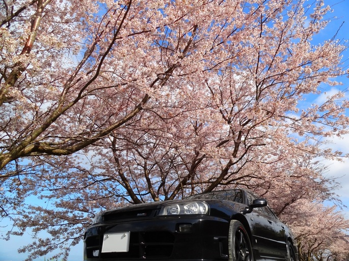 SKYLINE'12_sakura(3).jpg