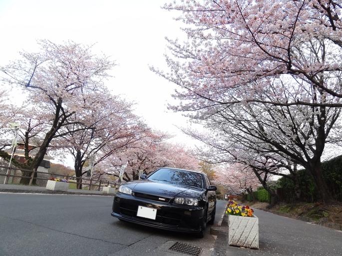 SKYLINE'12_sakura(5).jpg