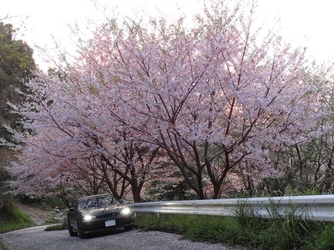 SKYLINE'13_toyoashihara-shrine (1).JPG