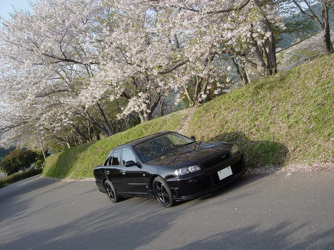 SKYLINE_cherry blossoms_6